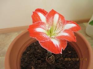 冬の寒さにも負けず花を咲かせました。名前は何というのかわかりませんがとても癒されます。