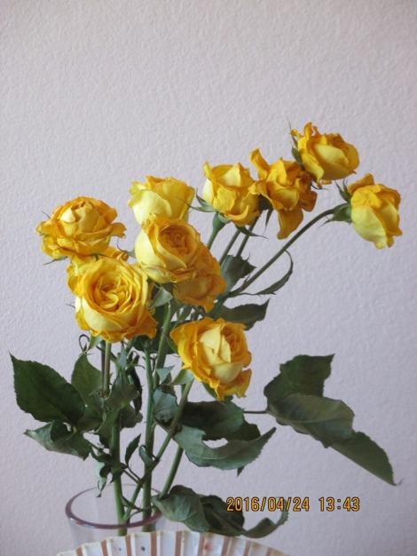 黄色いバラが枯れかかっているところ