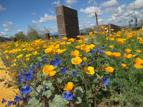 近所のハイキングトレイルのエントランスに咲き乱れるポピーの花